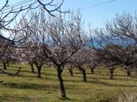 Image for Lloret de Vistalegre, Mallorca